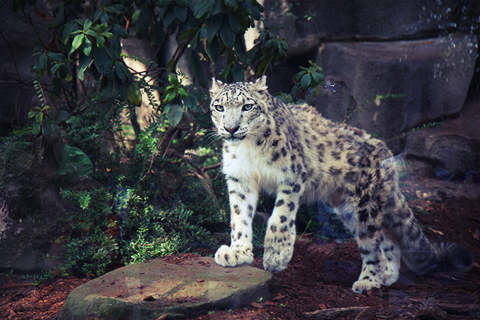 Wordless Wednesday Jardin Des Plantes Paris Part 2 The Zoo
