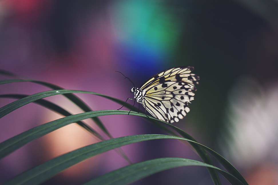 butterflies_2015_1