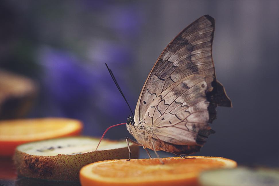 butterflies_2015_2